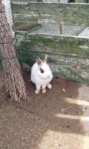 稲葉山牧場 ウサギ